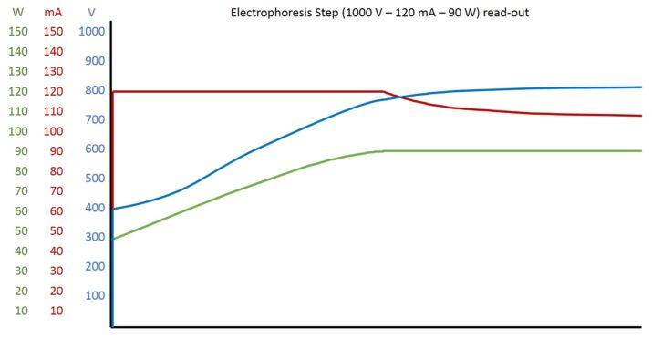 Elektrophorese Read-Out